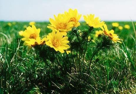 tavaszi mátrai képek - Google keresés