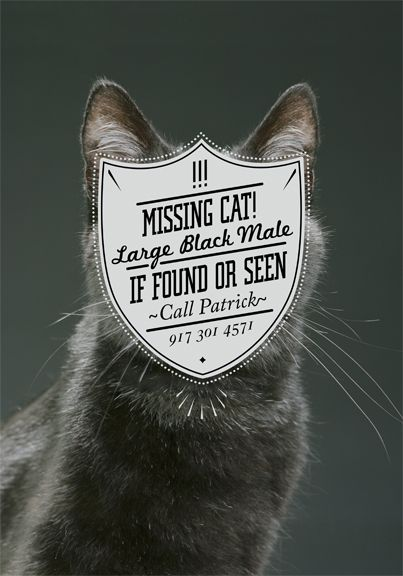 Best Posters Images On Pinterest Poster Designs Typography - Missing cat gets found next to his own missing cat poster