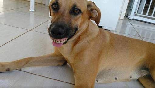 Hond kan niet stoppen met lachen na bijzondere vondst in tuin - HLN.be