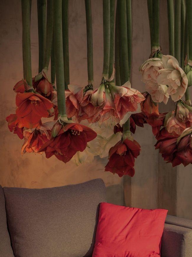 die besten 25 winterblumen ideen auf pinterest. Black Bedroom Furniture Sets. Home Design Ideas