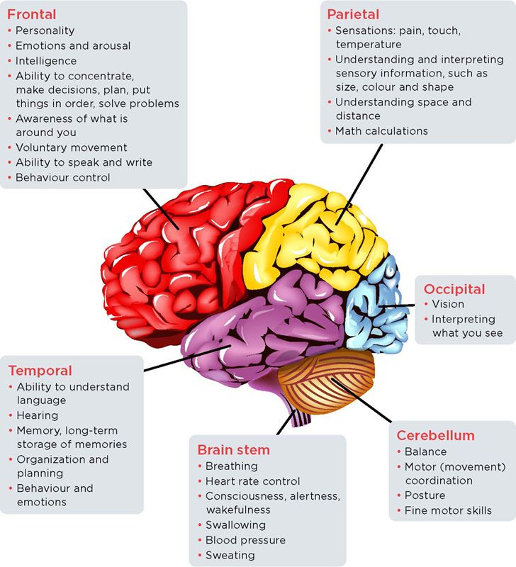 stroke, brain regions, functions, frontal, parietal ...