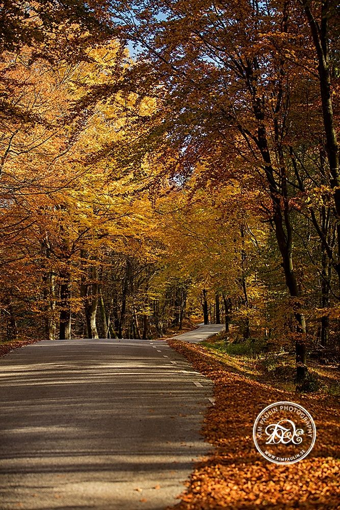 Beautiful Autumn - This is such a beautiful time of the year. I just love it. Kisses
