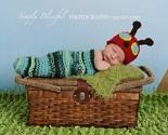 "Baby Caterpillar   etsy.com: ""BabiesBugsAndBees"""
