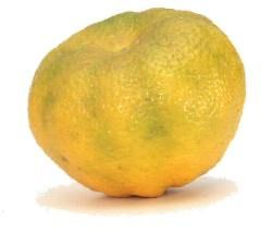 It's like a really ugli lemon