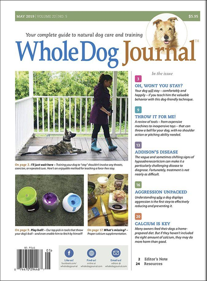 Download The Full May 2019 Issue Pdf Dog Food Recipes Puppy