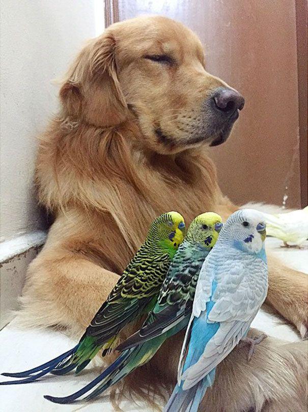 um-cachorro-oito-passarinhos-e-um-hamster-são-os-amigos-mais-incomuns-20