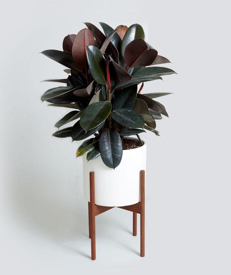 How to Choose a Plant for Every Room in Your House Ali Weber