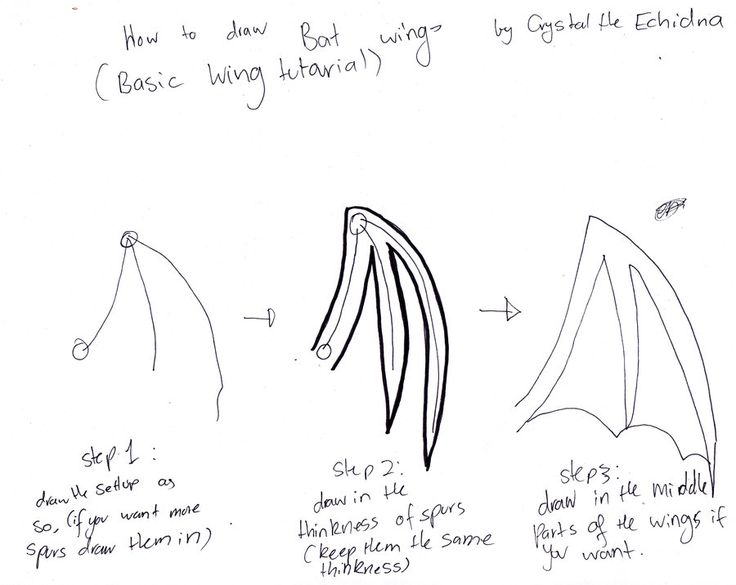 how to draw folded bat wings