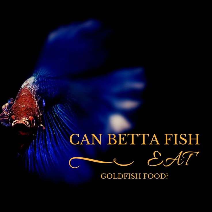 15 best betta fish names the many varieties of betta for Beta fish food