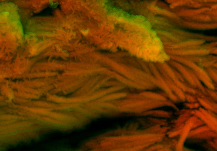 DDC-SEM of fossil - red - 1.jpg