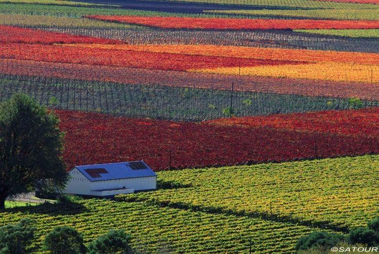 Vineyard in Robertson, South Africa. BelAfrique your personal travel planner - www.BelAfrique.com