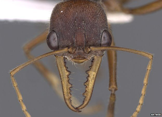 Scientists are embarking on a mission to capture a 3D image of every ant species known to science.
