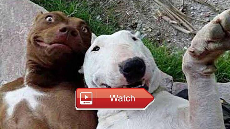 Cute Pets and Animals Videos Cute Animals Compilation Instagram Video Lucu Hewan  Try Not To Laugh Challenge Funny Cat Dog Vines compilation Best Funny Dogs and Cats Videos Funny Animals Vines Compilation instagram  on Pet Lovers