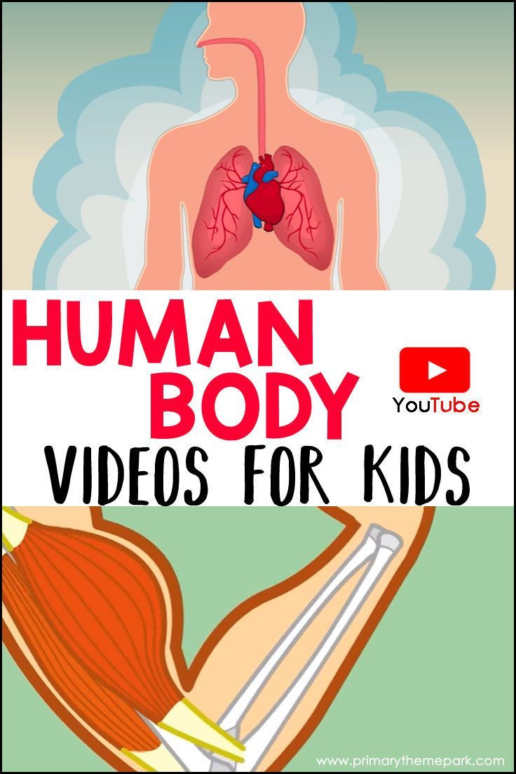 A collection of human body videos for kids on YouTube. These videos are a…