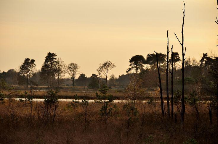 https://flic.kr/p/q7LNiC | Autumn Landscape | Nationaal Park De Groote Peel, The Netherlands