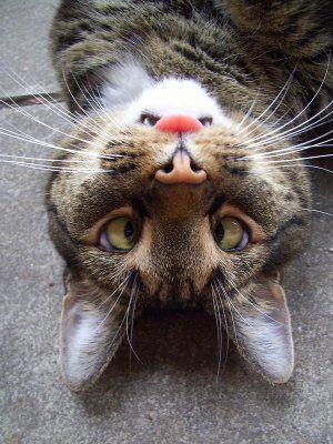 I feel funny today...   #cat