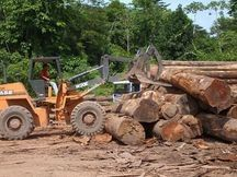 Pregopontocom Tudo: Desmatamento na Amazônia cresce 29% em um Desmatamento 🌿  O estado do Pará teve 3.025 km2 de sua área devastada, o que representa a maior taxa de desmatamento na Amazônia Legal. O Amazonas, contudo, é o estado que teve o maior aumento, com uma devastação 54% superior à registrada entre 2014 e 2015. Os únicos estados que apresentaram queda nas taxas foram o Acre e Mato Grosso. No entanto, Mato Grosso é o segundo estado com a maior área desmatada.
