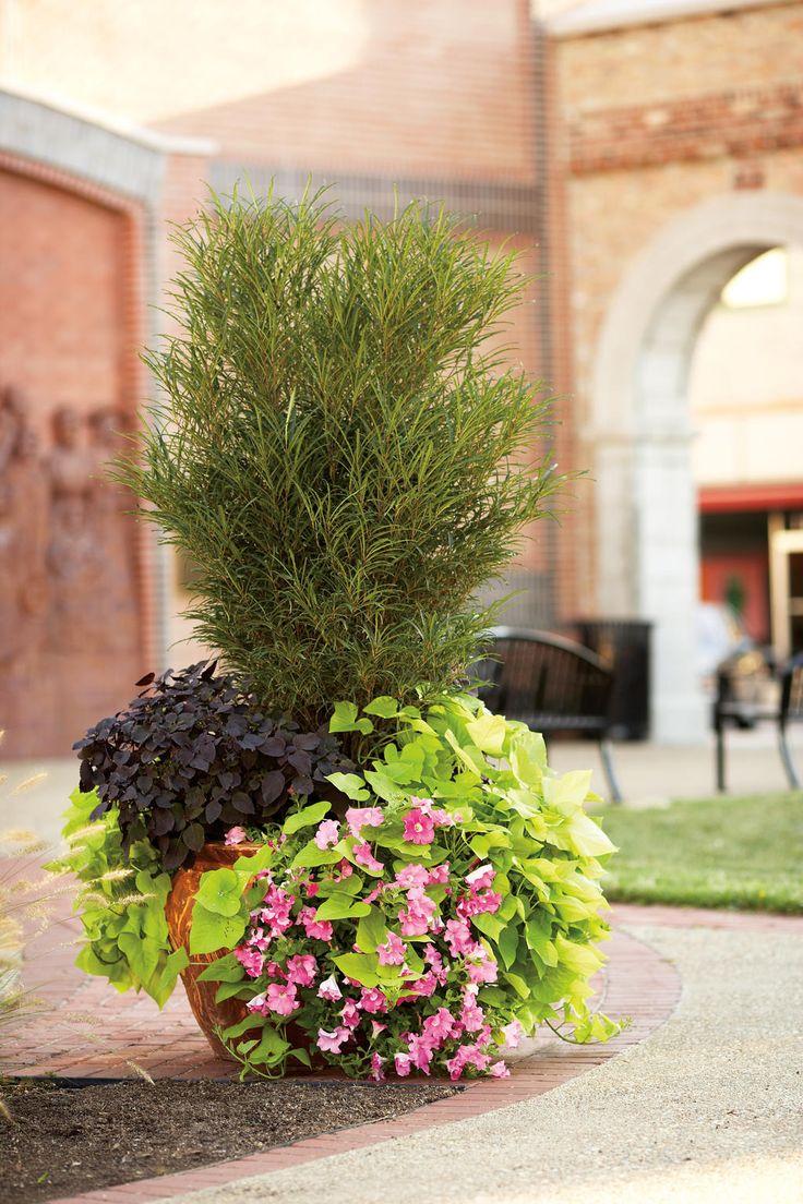 best gardening images on pinterest landscaping flower