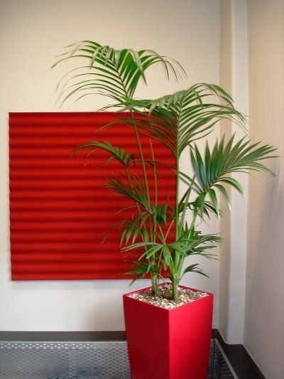 Pi di 25 fantastiche idee su giardinaggio appartamento su - Piante da interno poca luce ...