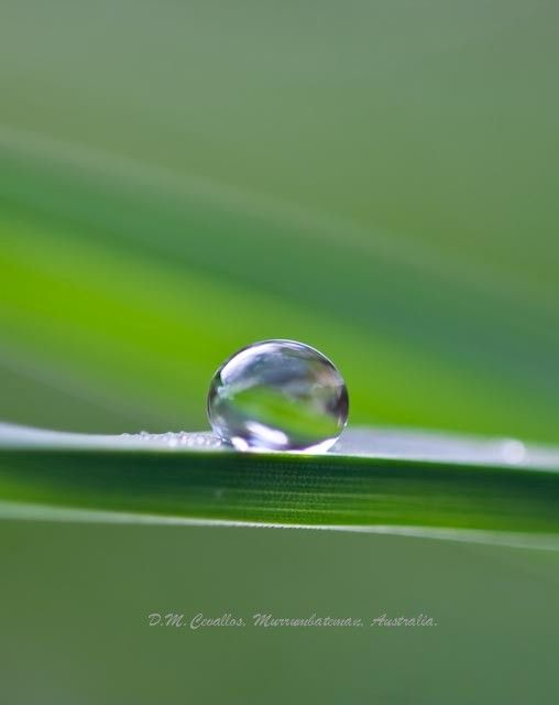 Perfect drop of water on a grass leave