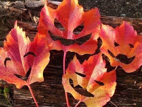 Décoration dHalloween avec des feuilles dautomne :) ^^  Bricolage ...