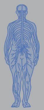 """""""<神経の仕組み>(…)細胞の基本的な作りは一緒です。(…)神経細胞の中を電気信号(…)継ぎ目のところは、化学物質(…)神経信号の伝わり方は二本立て。"""" 第4章効果的な解毒方法とは http://www14.plala.or.jp/margarita/chap%204.htm"""