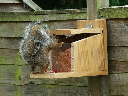 build squirrel feeders