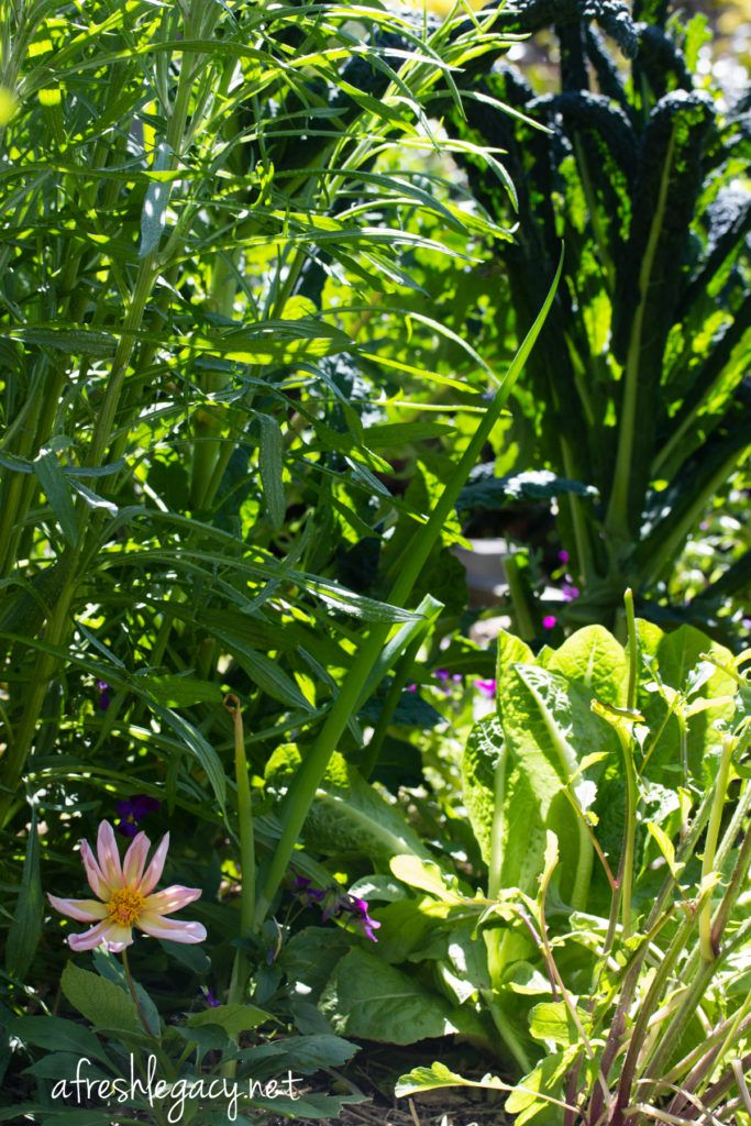 How to be mindful in the vegetable garden