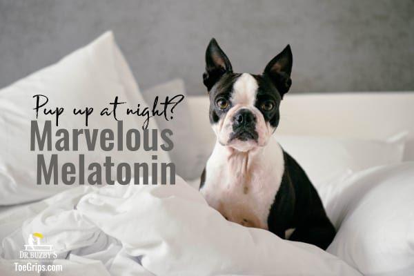Marvelous Melatonin For Dogs Dr Buzby S Toegrips For Dogs Melatonin For Dogs Dog Seizures Dogs