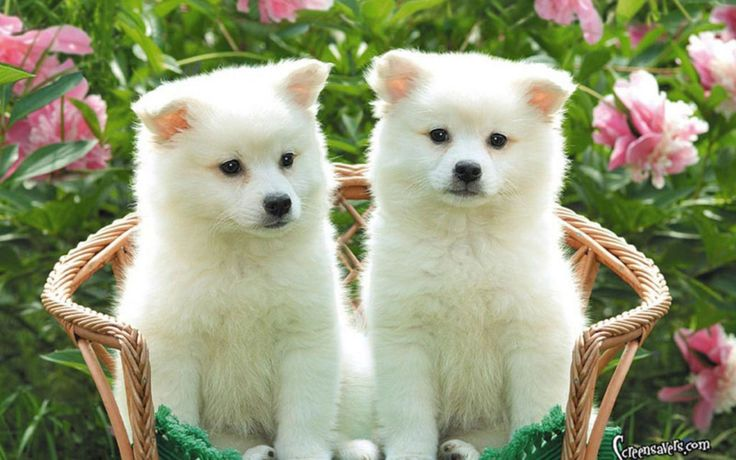 Puppies Free HD Wallpapers and Backgrounds Download (26)  Puppies Free HD Wallpapers and Backgrounds Download (26) http://www.urdunewtrend.com/hd-wallpapers/animal/puppies/puppies-free-hd-wallpapers-and-backgrounds-download-26/ Puppies 10] 10K 12 rabi ul awal 12 Rabi ul Awal HD Wallpapers 12 Rabi ul Awwal Celebration 3D 12 Rabi ul Awwal Images Pictures HD Wallpapers 12 Rabi ul Awwal Pictures HD Wallpapers 12 Rabi ul Awwal Wallpapers Images HD Pictures 19201080 12 Rabi ul Awwal Desktop HD…