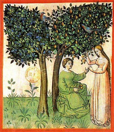 Gathering plums; Tacuinum Sanitatis, 15th c., Paris