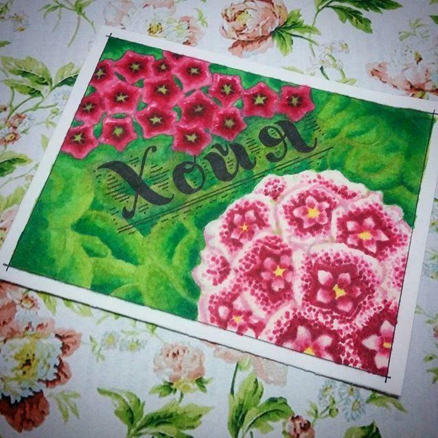 Для этой темы 4/8 Необычные цветы для #скетчмарафон_аромат_весны я выбрала удивительное растение - Хойя. Я вживую его не видела, но по референсам влюбилась в его мясистые цветки, как из воска!!! Теперь хочется найти рассаду или семена этого чудесного растения!!! #хойя #hoya