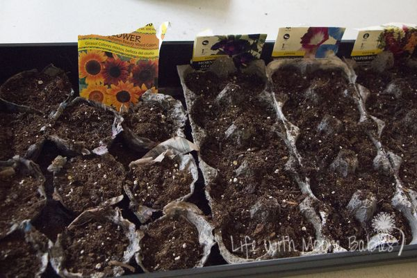 Life with Moore Babies: Recycled Seed Planters