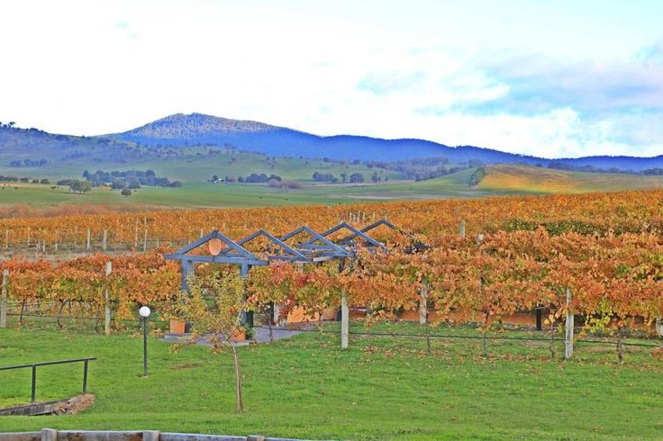 This amazing vineyard is at the base of the Snowy Mountains!