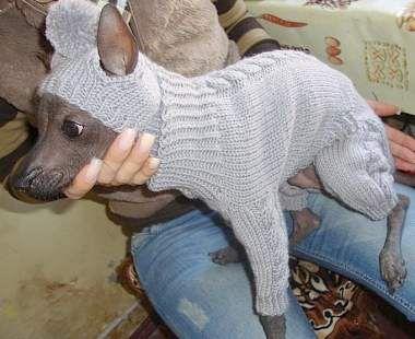 вязание для собак спицами