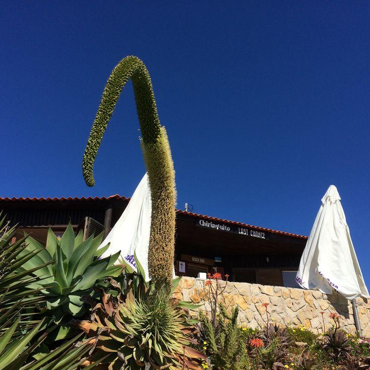 Stunning weather in Algarve - deep blue sky