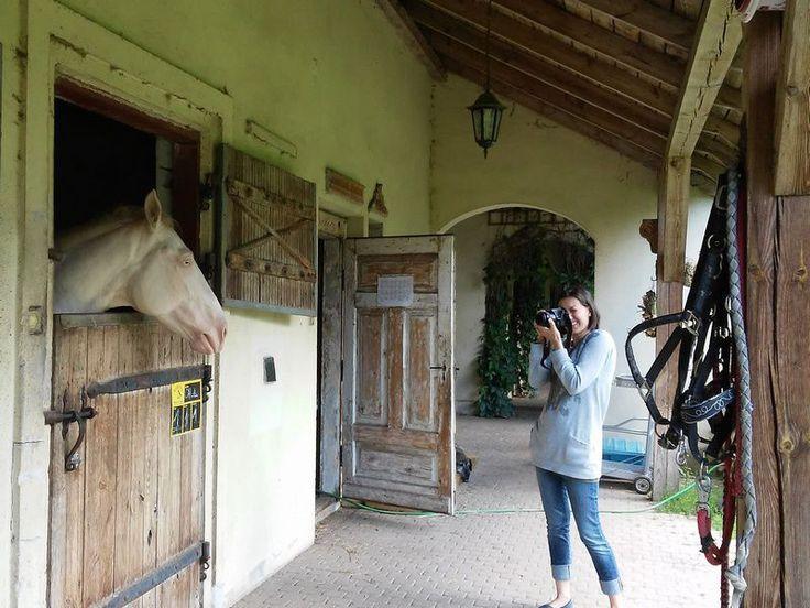 inspiracje - ceramiczne konie