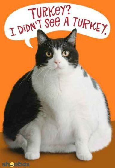 Funny Cat Thanksgiving Quote thanksgiving pictures happy thanksgiving thanksgiving quotes funny thanksgiving quotes thanksgiving quotes for family best thanksgiving quotes thanksgiving cat