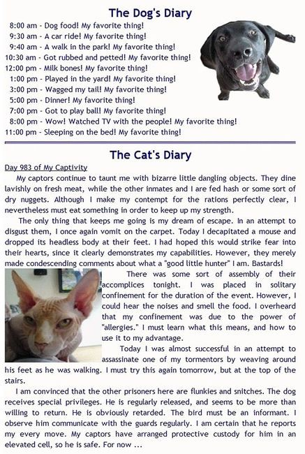 Dogs and cats diary