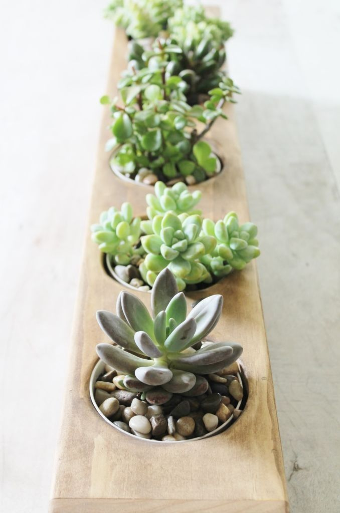 Create a modern succulent centerpiece for your dining room or patio table.