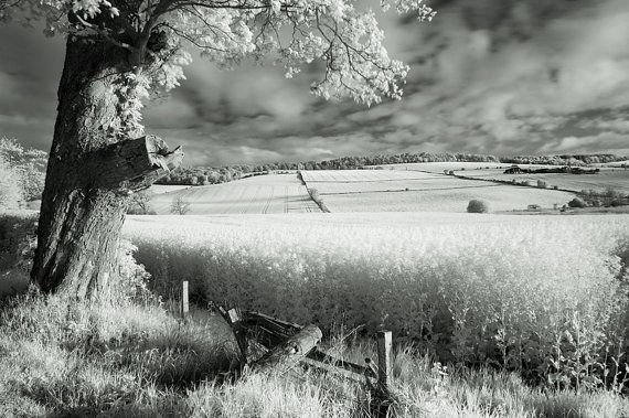 infrared landscape photograph, black and white photography, fine art photography, wall art, home decor