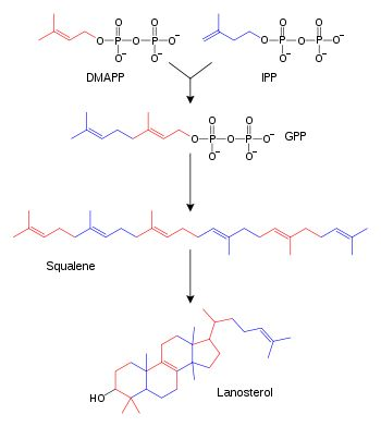 terpene and steroids biosynthesis