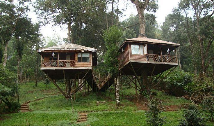 Kerala's 7 Best Tree House Experiences