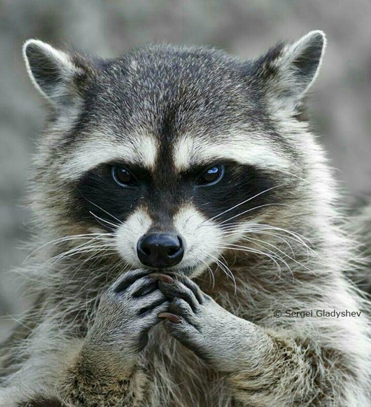 I will find you. And I will destroy you. Mwahahaha!!! Mwahahhaha!!!