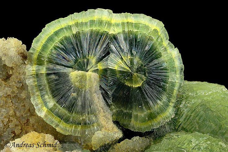 Wavellite, FOV~25 mm, Mauldin Mtn, Montgomery Co, Arkansas, USA // Photo: Andreas Schmid #minerals #crystals #Arkansas