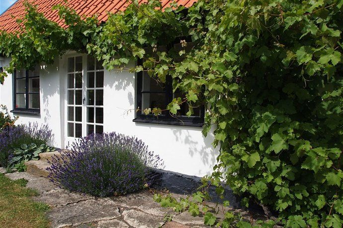 Front yard with lavendar. Skillinge, Skåne, Sweden