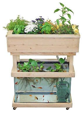 Instructions for using a 20 gallon aquarium for setting up a small aquaponics system. (This could be a fun way to experiment growing greens hydroponically.)