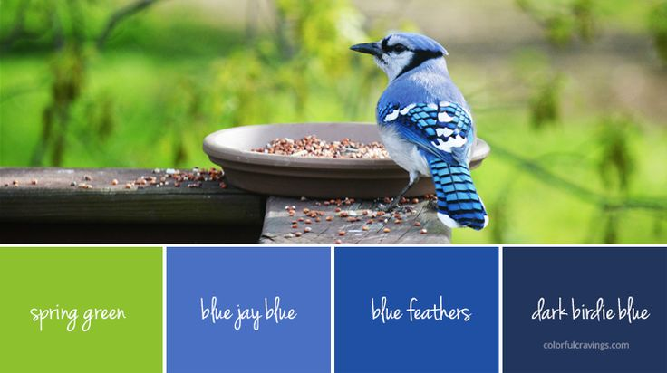 color palette | spring blue bird | blue, green | colorfulcravings.com