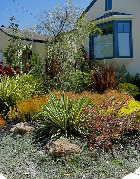 Drought resistant landscaping colorful drought tolerant for Drought tolerant trees