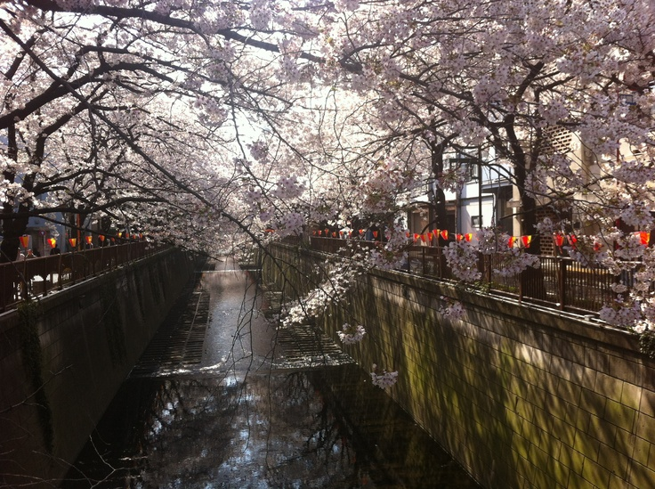 Another Meguro River shot with the sun streaming through the branches to reflect off the water.  Taken early April 2012.